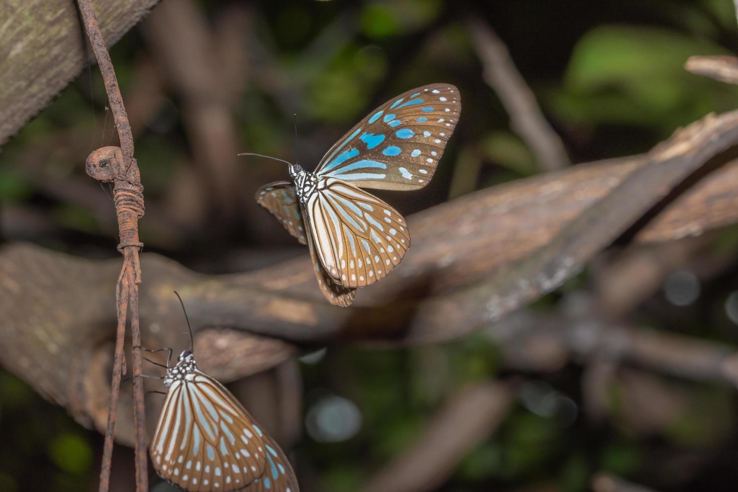 papillons dans la nature photo