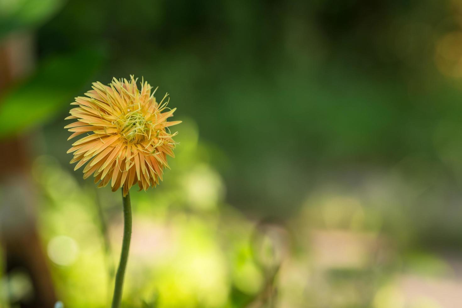 fleur jaune sur fond vert photo