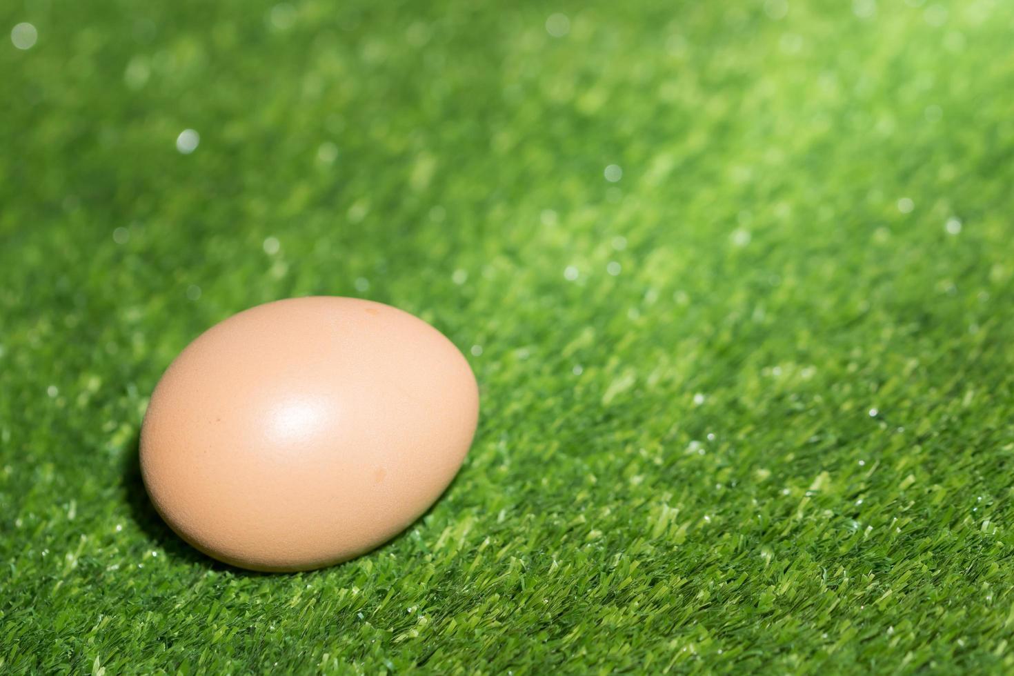 oeuf de poule sur fond vert photo