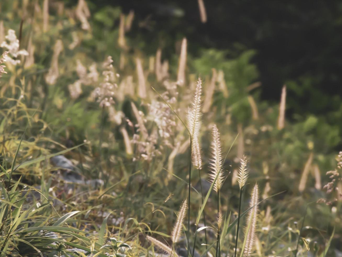 herbe sauvage au soleil photo