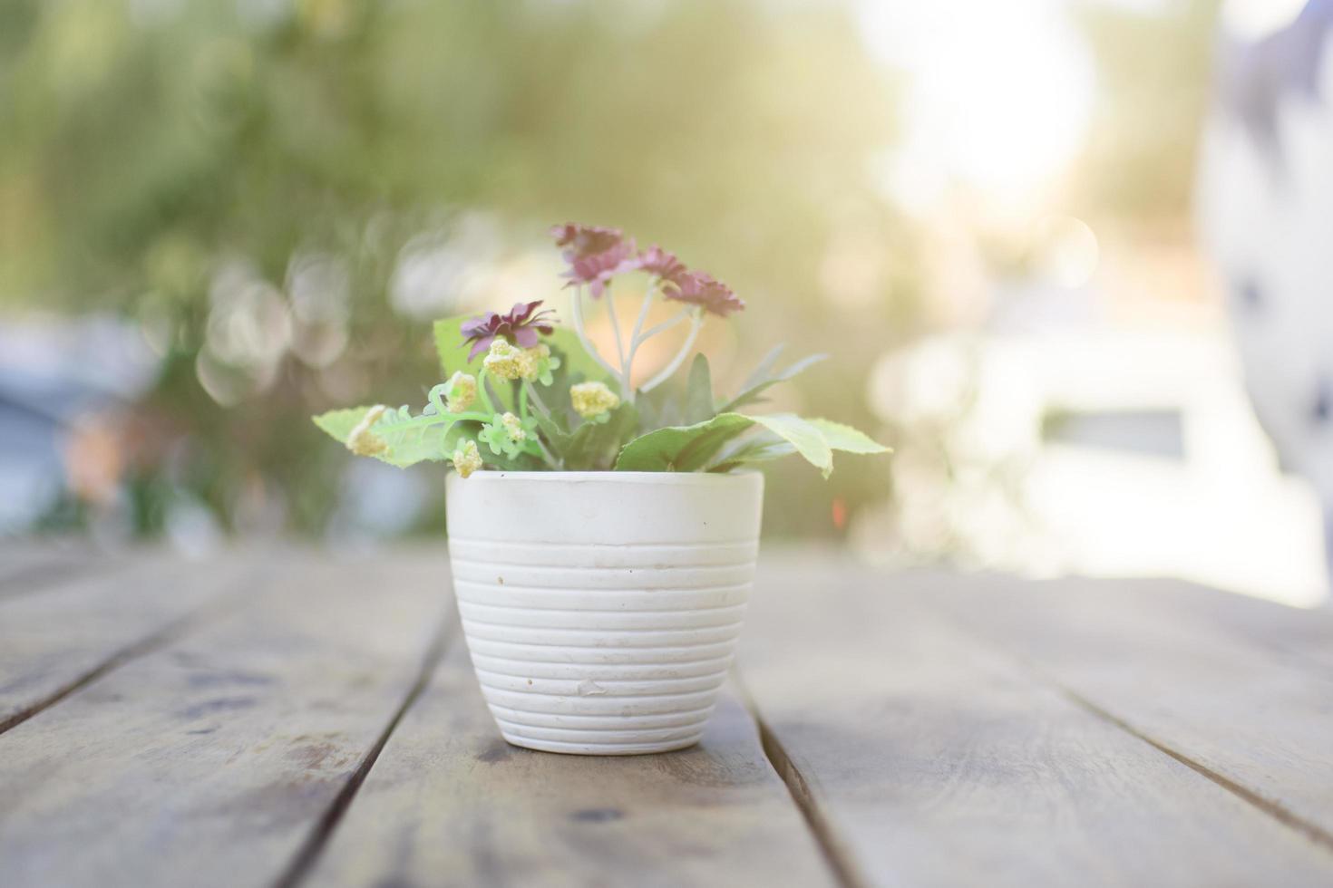plante en pot sur une table photo