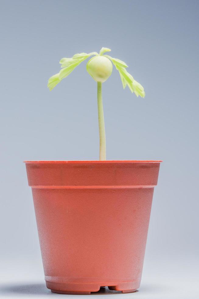 petit arbre dans un pot photo