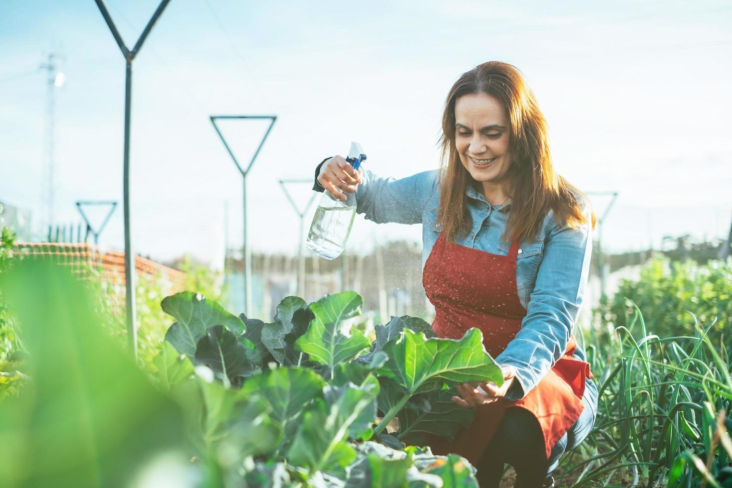 agricultrice arrosant une plante de brocoli avec un arroseur dans un champ biologique photo
