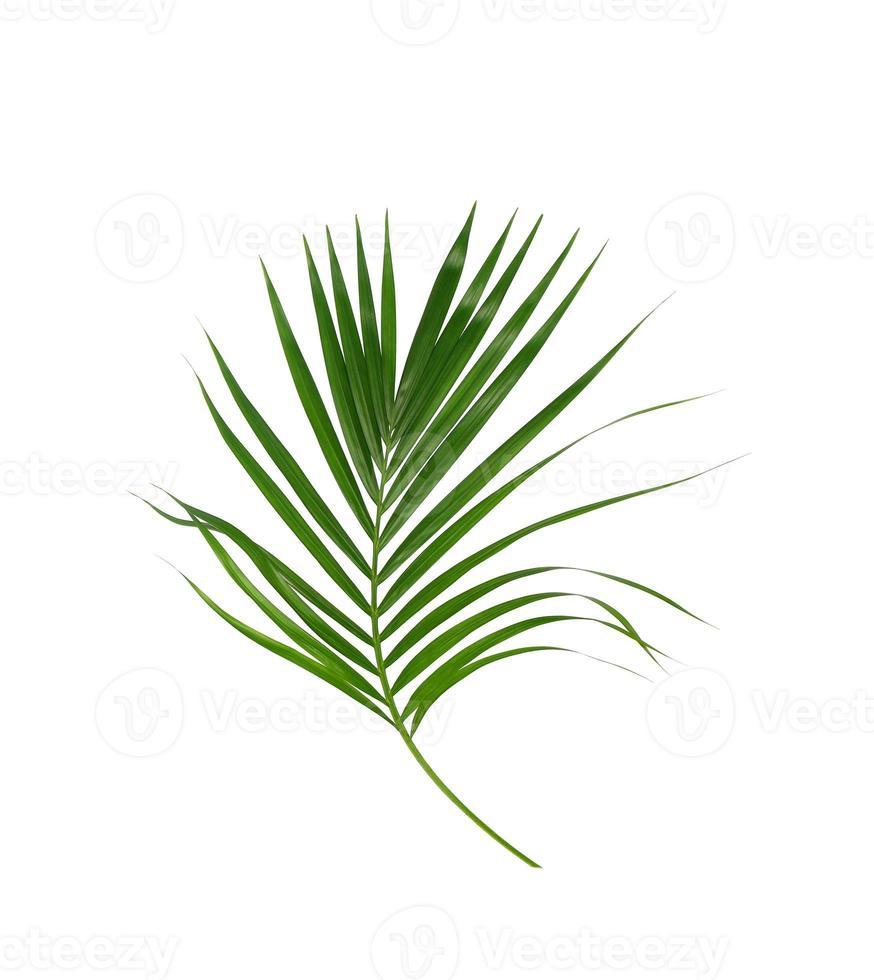 feuille de palmier isolée photo