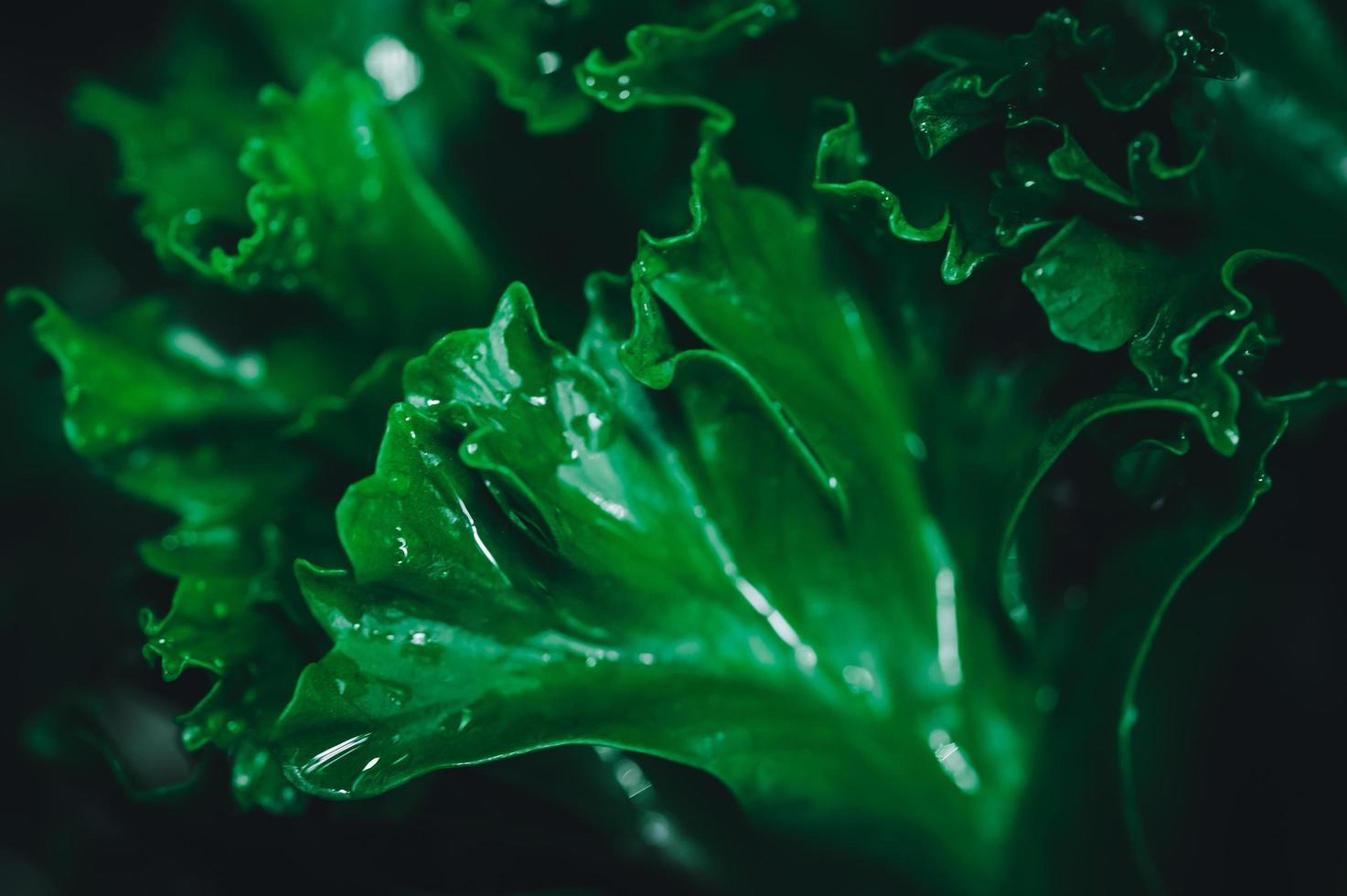 fond de feuilles vertes photo