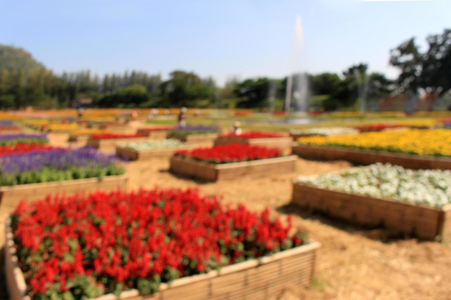flou dans les couleurs du printemps fleurs et champ de jardin photo