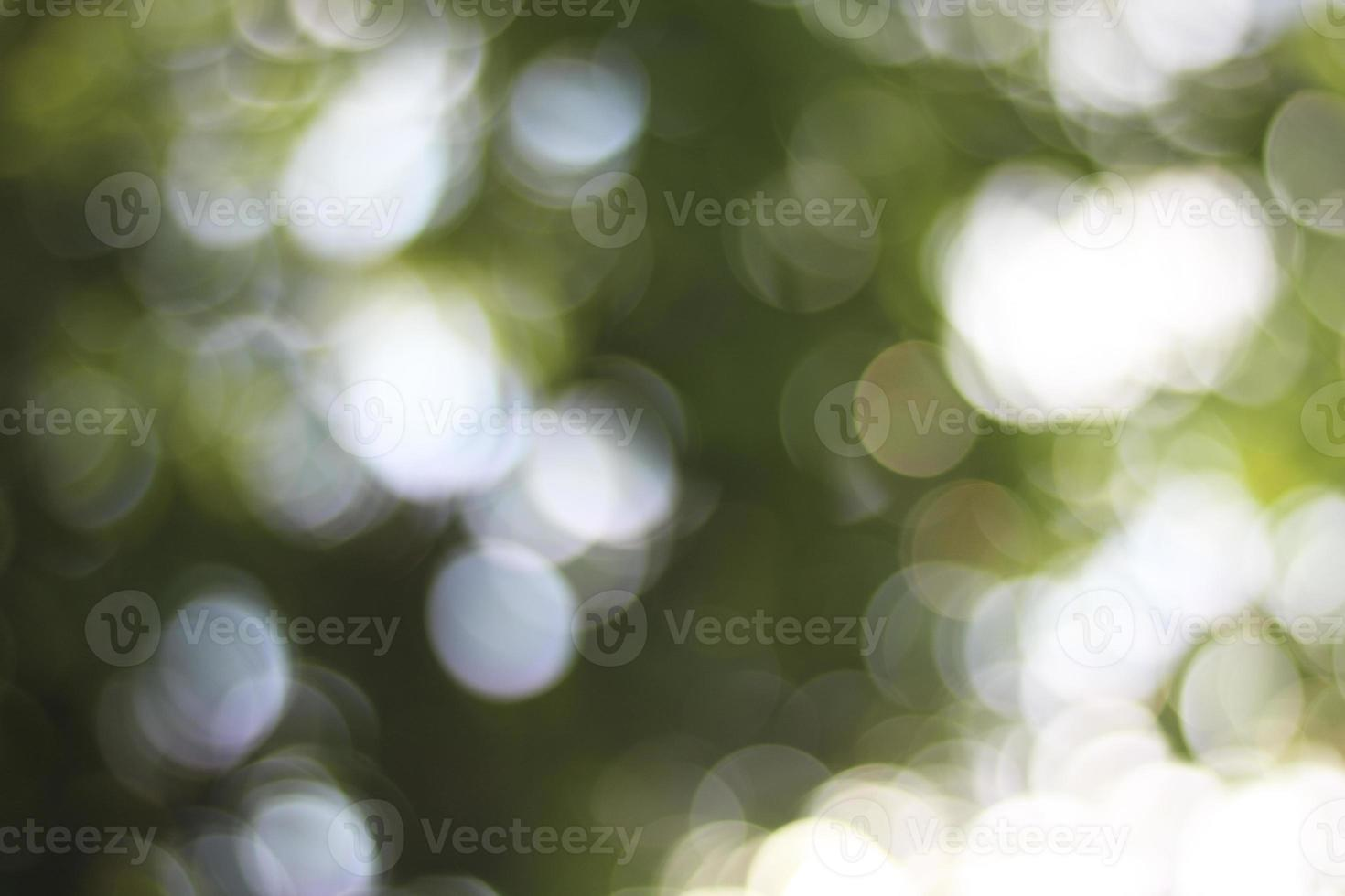 arbre vert et bokeh léger photo