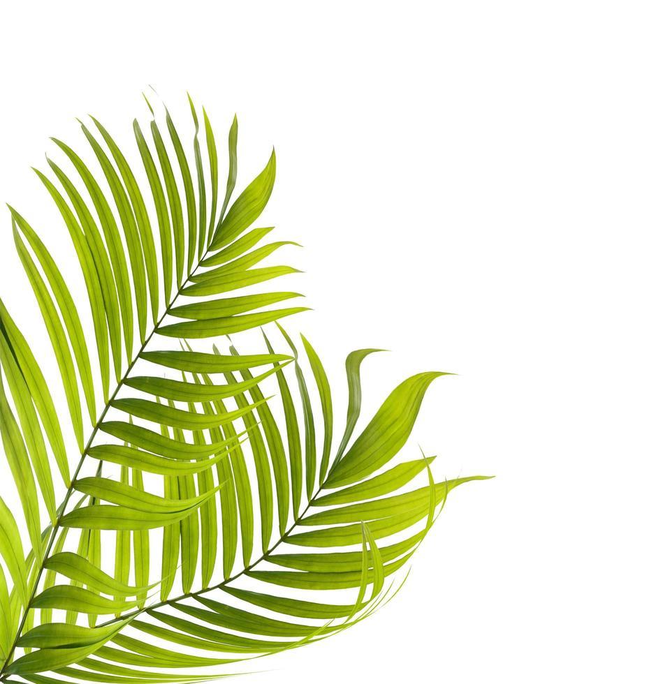 deux feuilles vertes photo