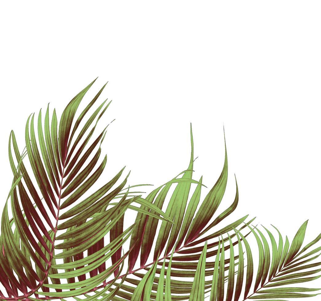 groupe de feuilles de palmier vertes et brunes photo