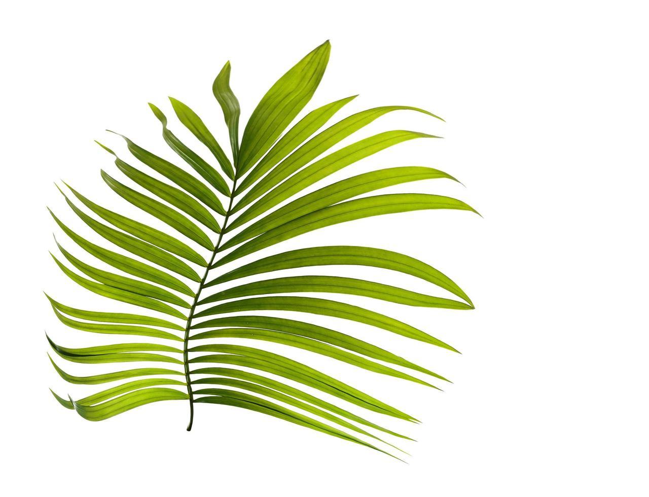 petite feuille tropicale verte photo