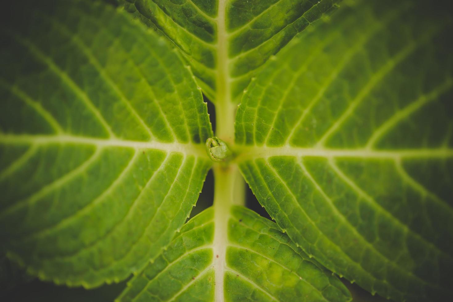 gros plan, de, vert, plantes fraîches, herbe, pour, arrière-plan photo