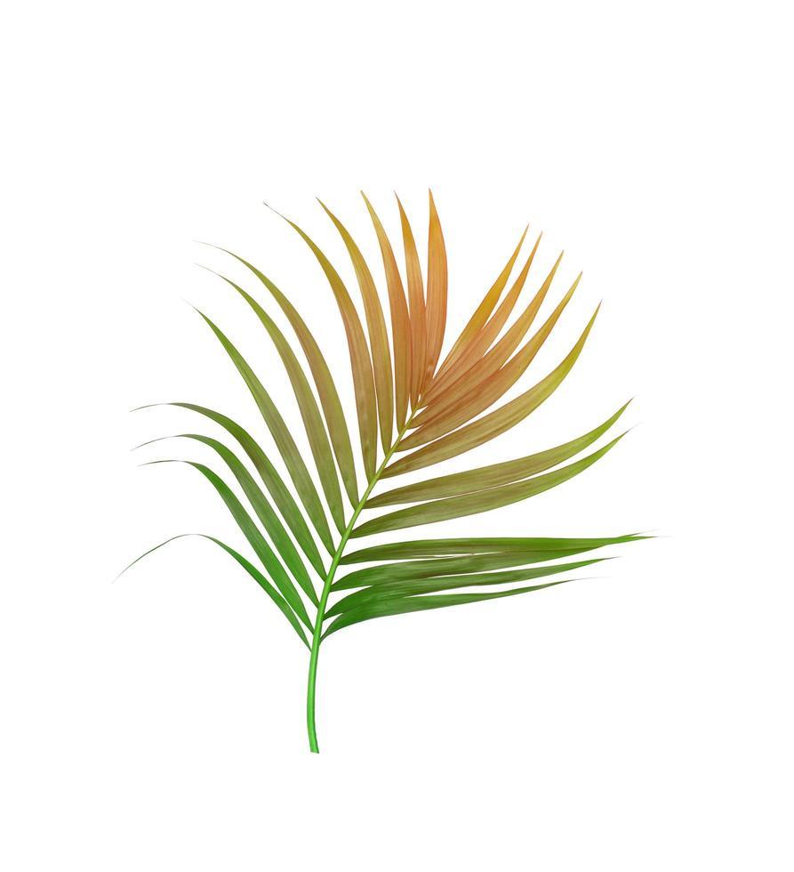 feuillage brun et vert photo