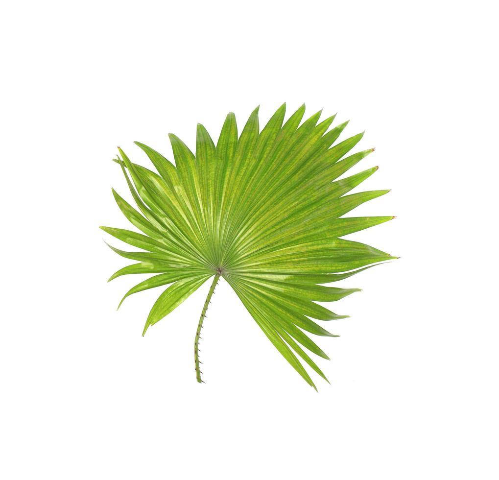 feuillage tropical épineux photo