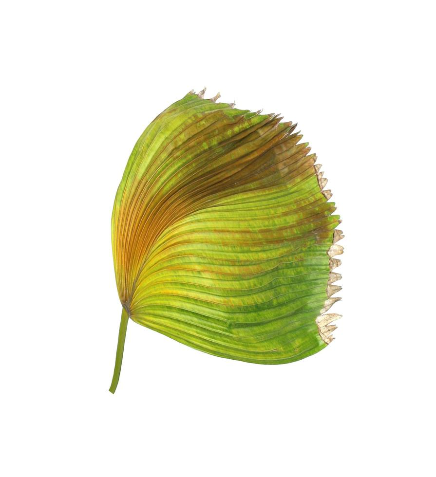 feuillage vert et brun sur blanc photo