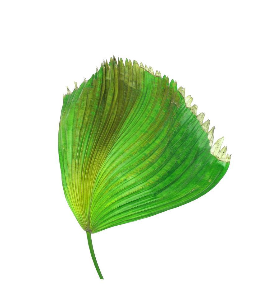 feuilles de palmier vertes et brunes photo