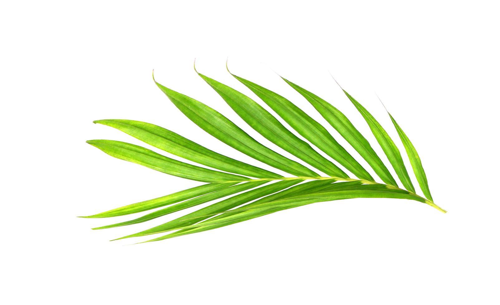 branche tropicale verte vibrante photo