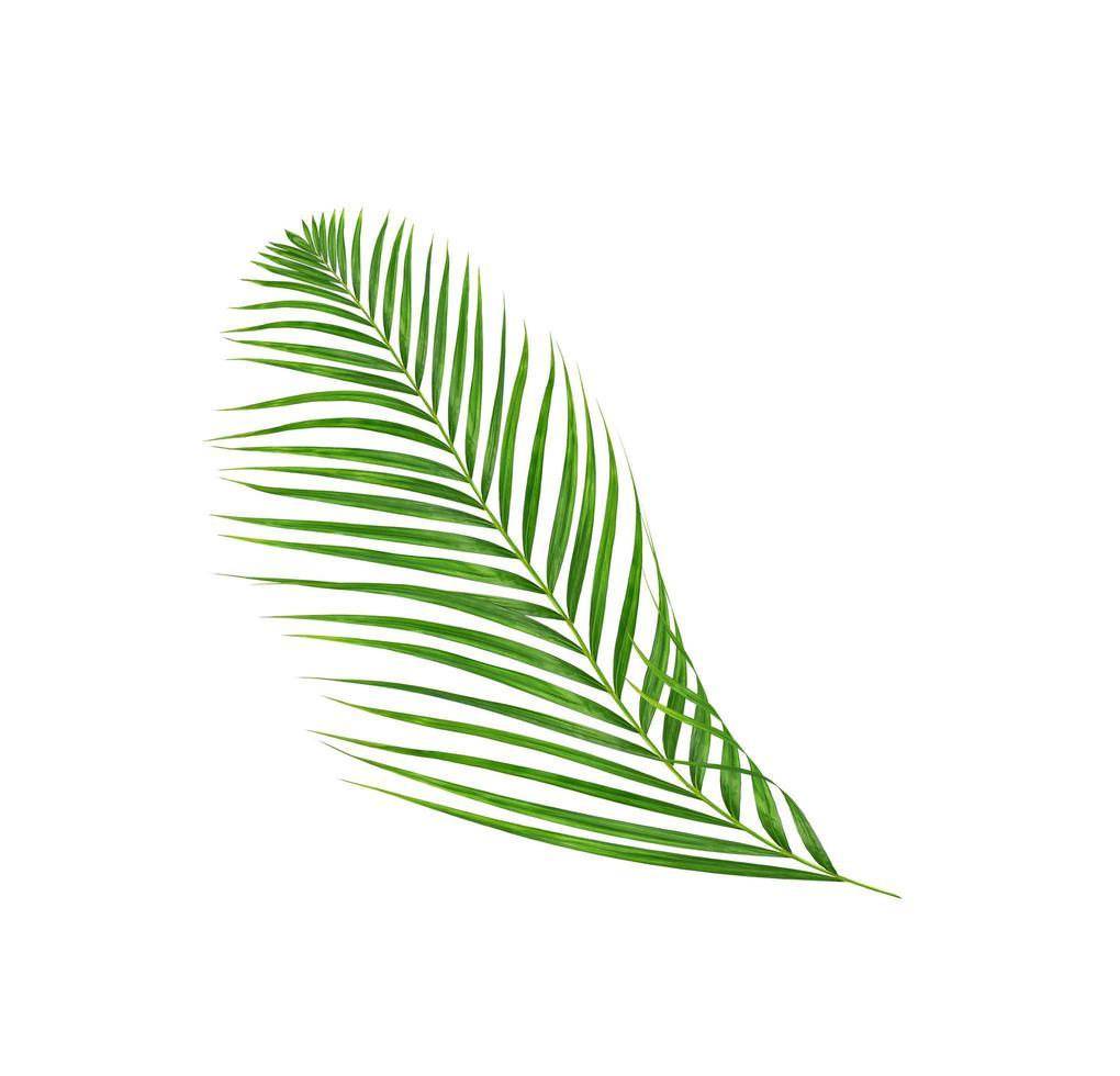 branche de feuille tropicale verte sur blanc photo