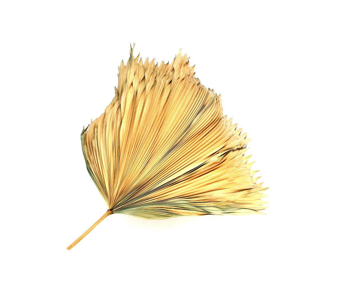 Feuille de palmier sèche sur fond blanc photo