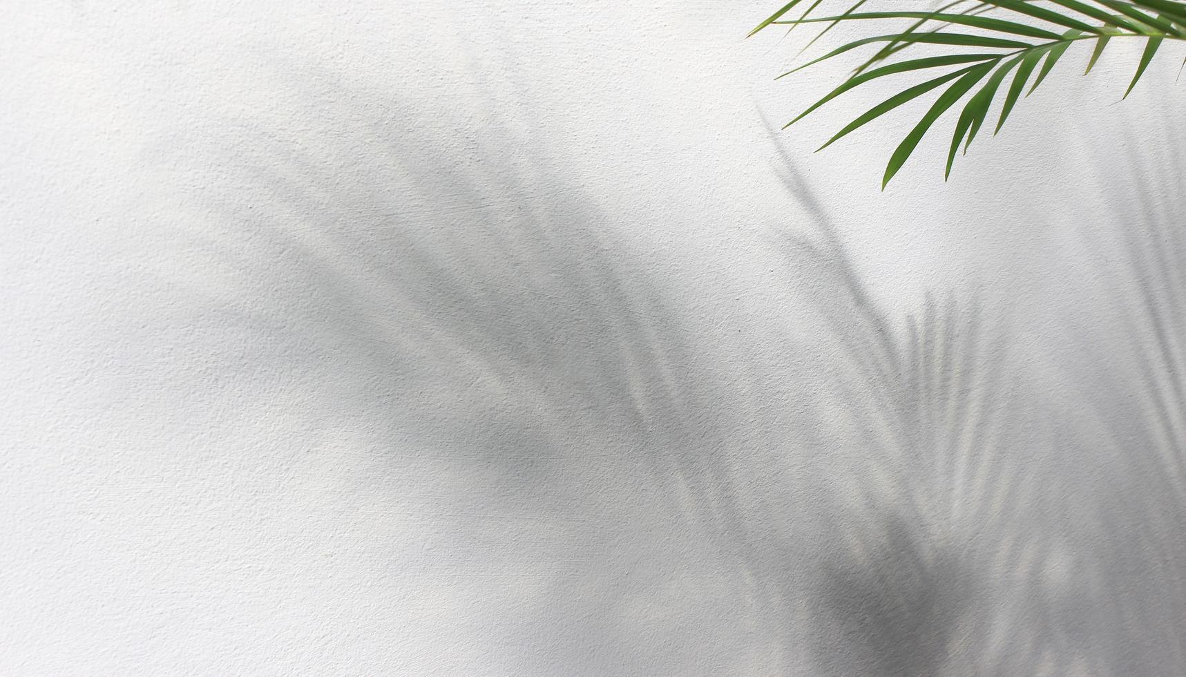 feuille de palmier et ombres photo