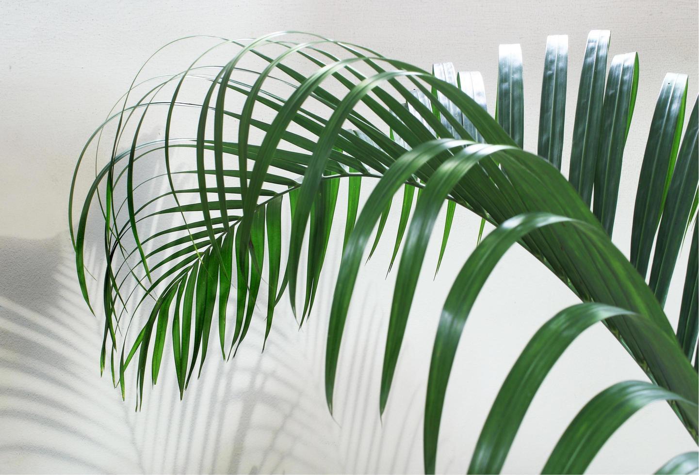 gros plan de feuille de palmier photo