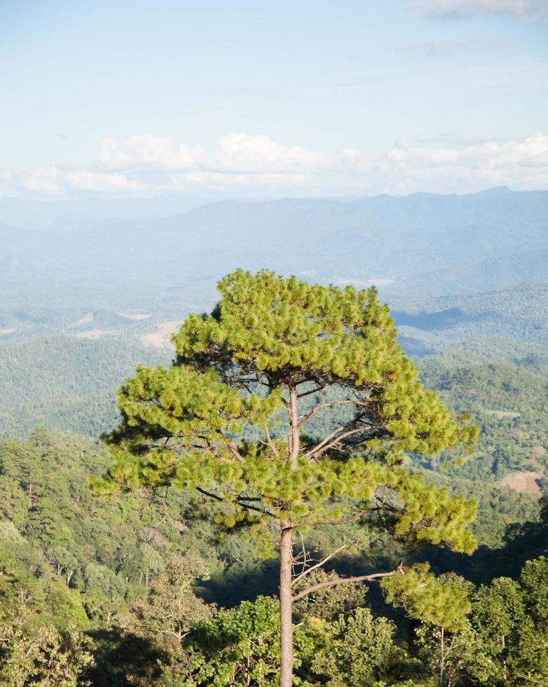grands arbres poussant au sommet de la montagne photo