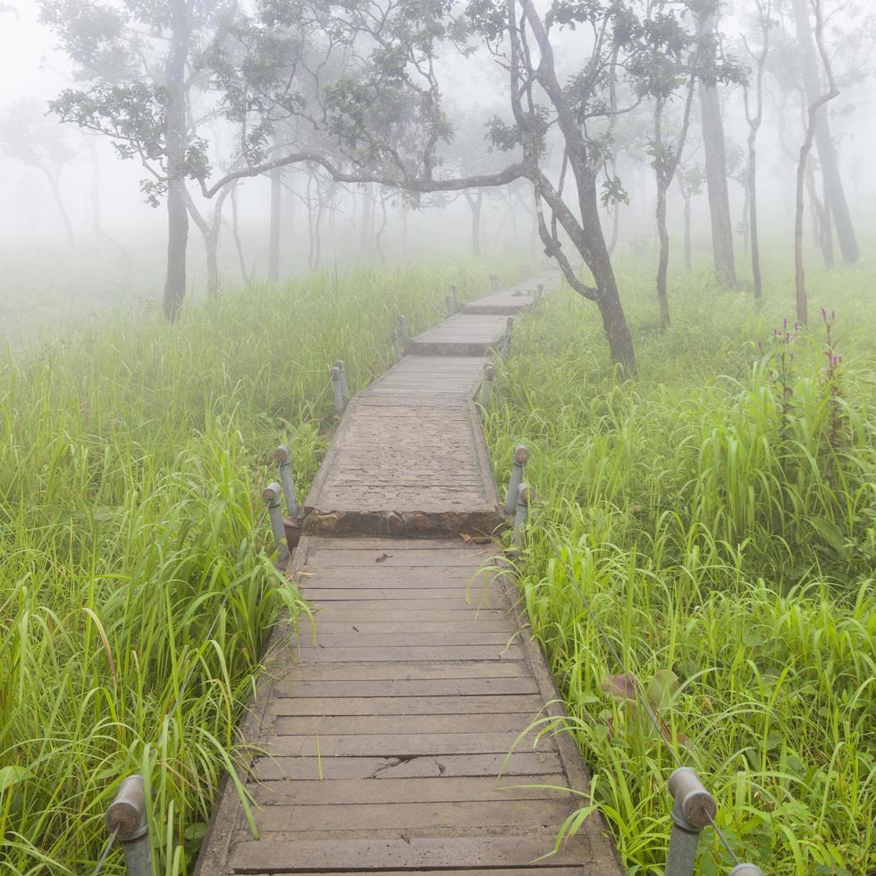 passerelle en bois dans la forêt photo