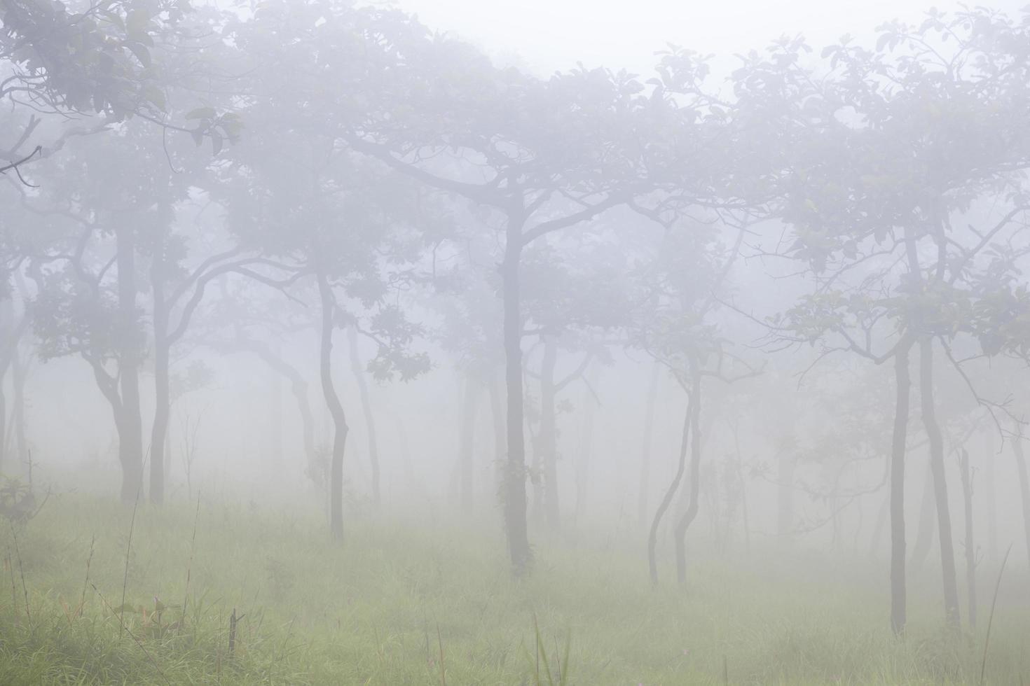 brume sur la montagne le matin photo