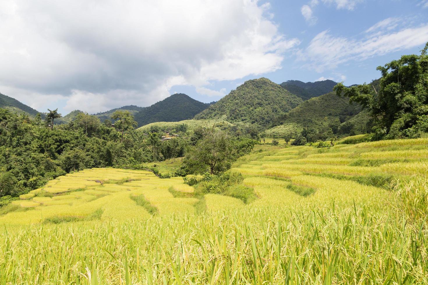 ferme de riz sur la montagne en thaïlande photo