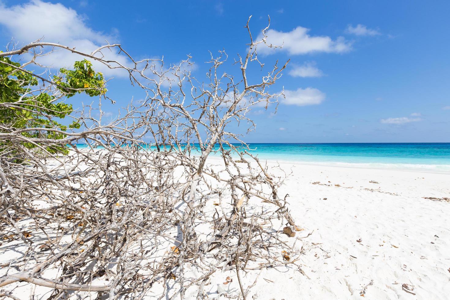 brindilles sèches sur le sable photo
