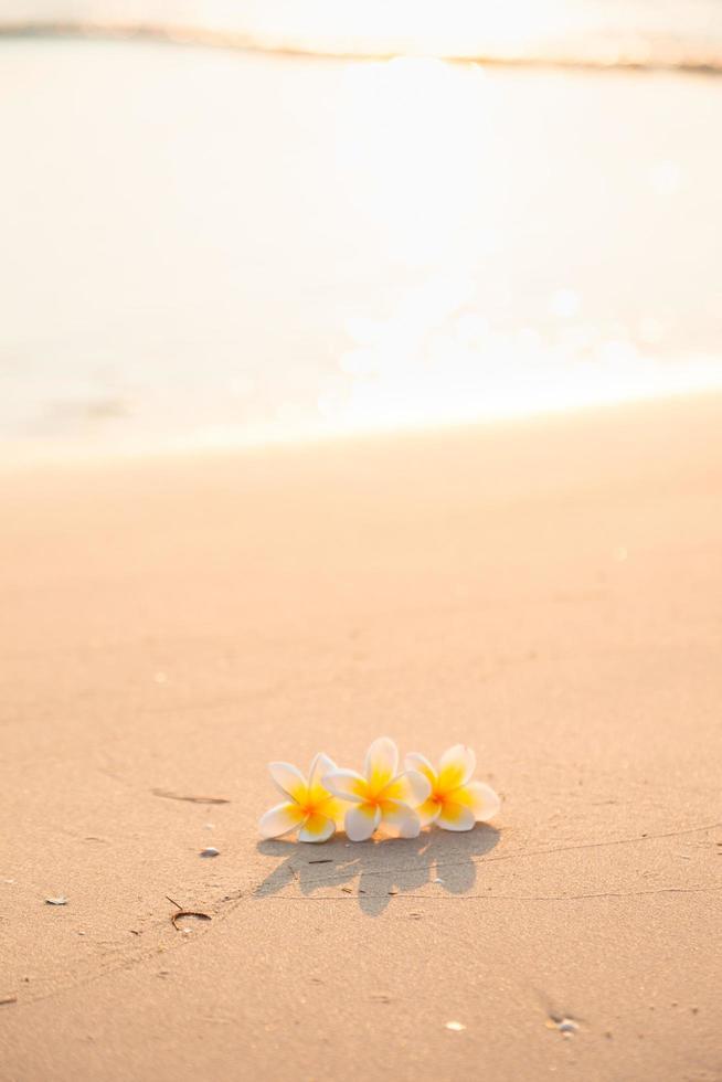 fleur sur le sable sur la plage photo