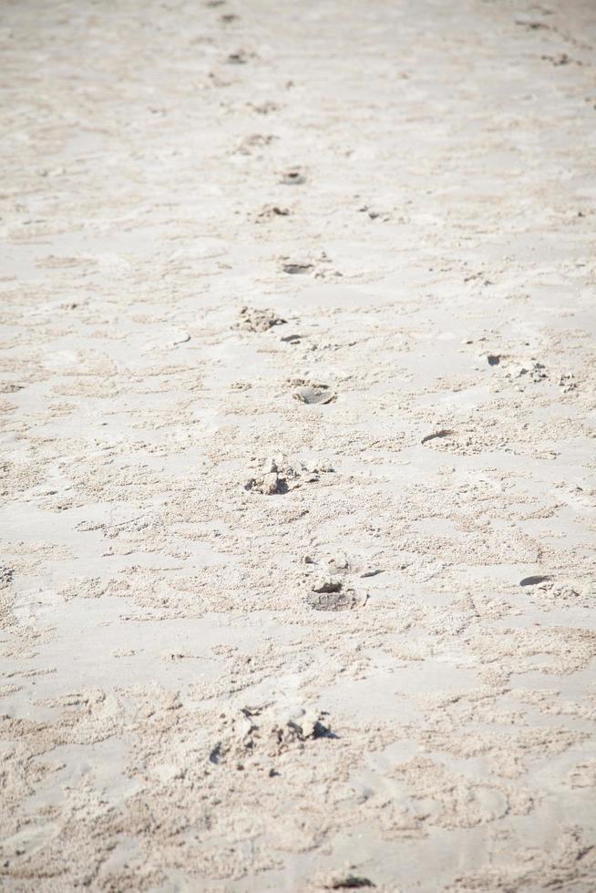 empreintes de pas dans le sable sur la plage photo
