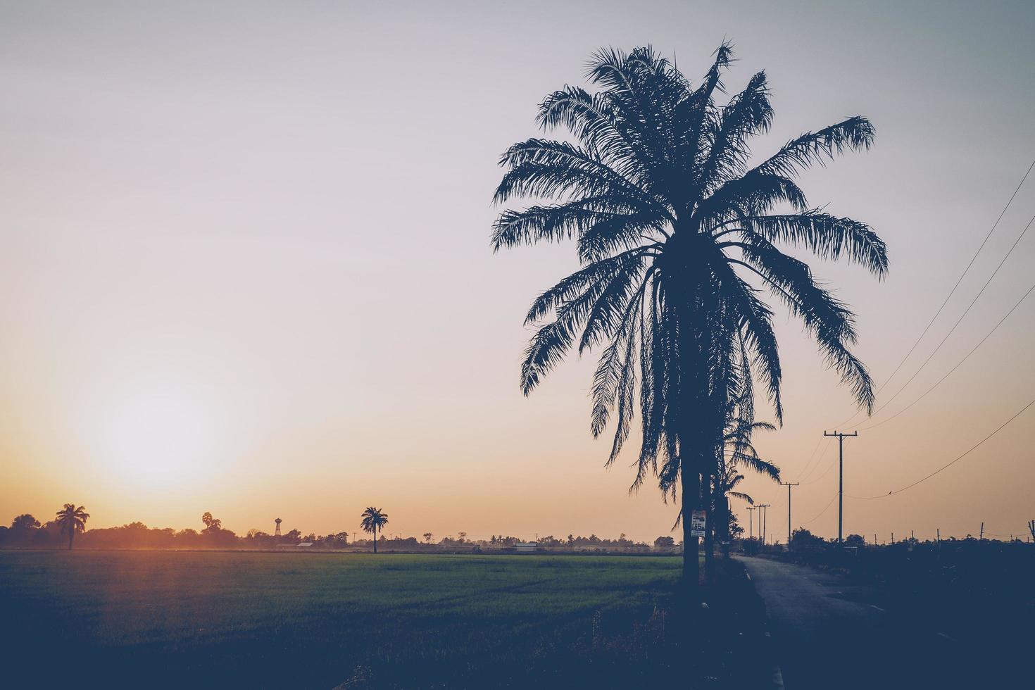 Rizière avec cocotiers au coucher du soleil photo