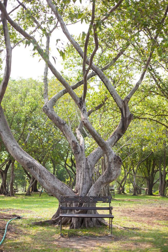 banc en bois sous l'arbre photo