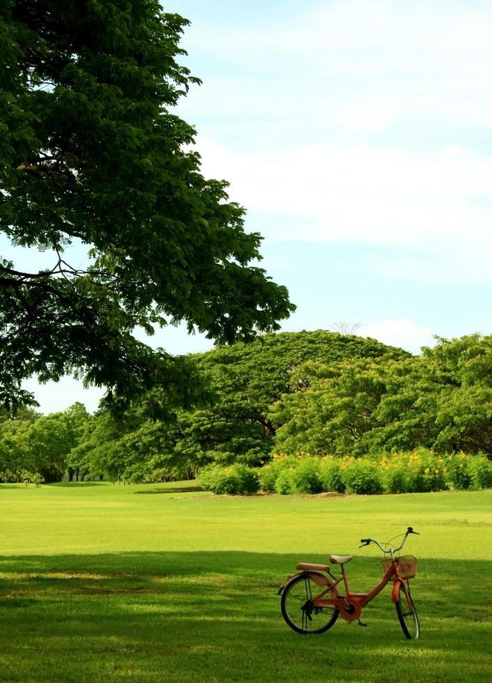 vélo dans le jardin photo