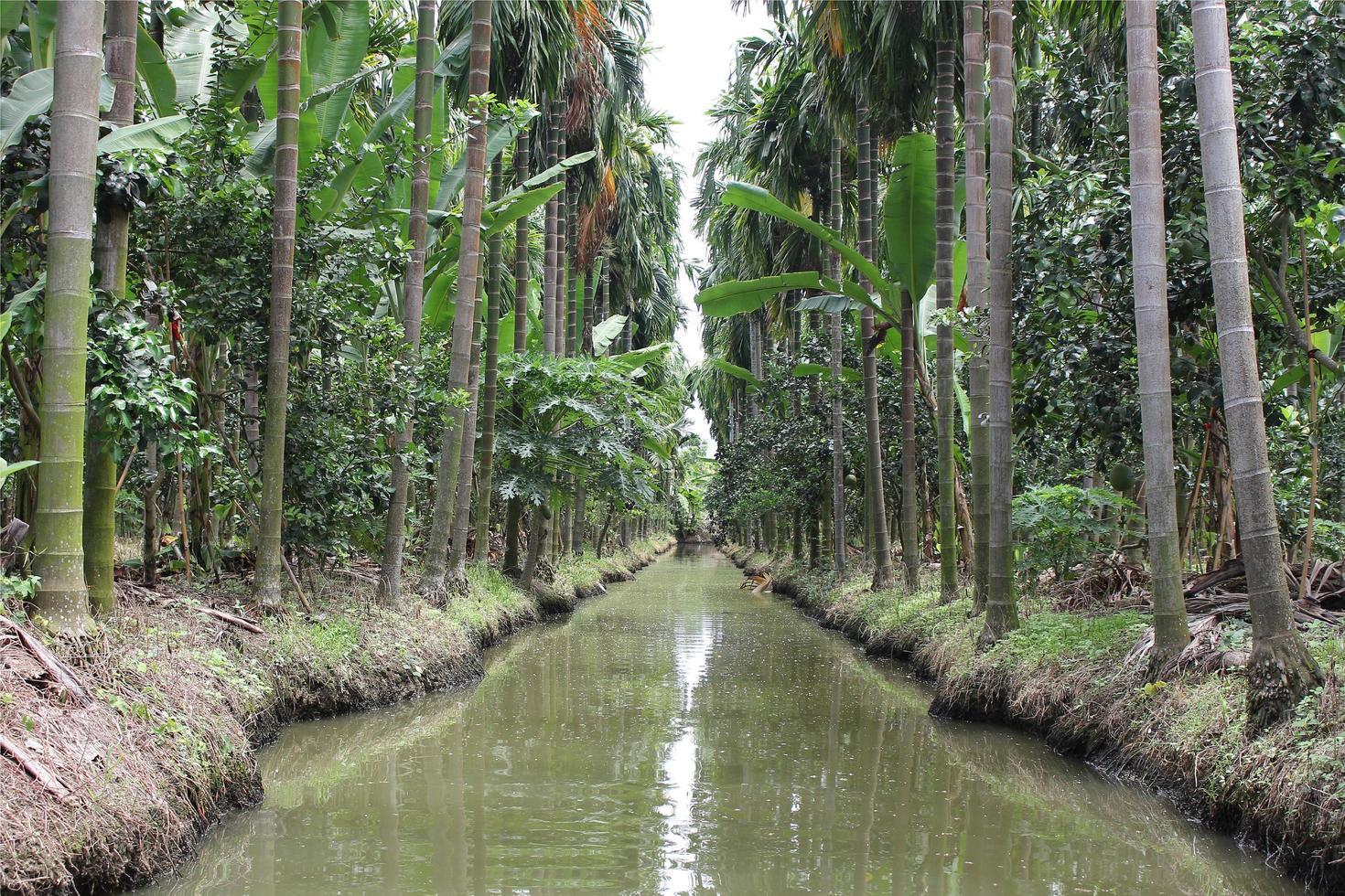 ruisseau dans une jungle photo