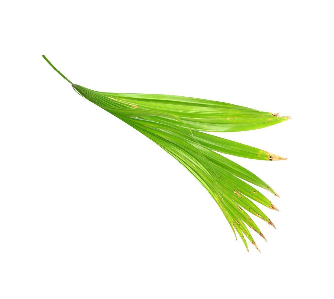 vue latérale d'une feuille verte photo