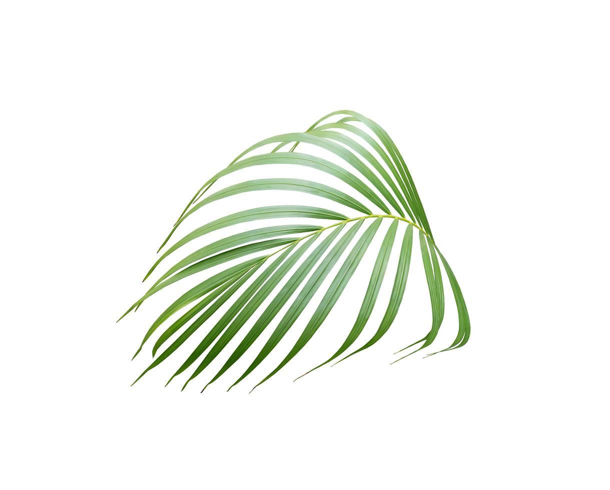 feuille verte luxuriante tropicale photo