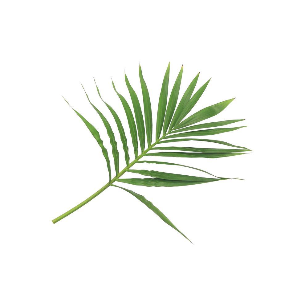 éventail de feuilles vertes photo