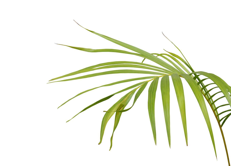 feuille vert clair tropicale photo