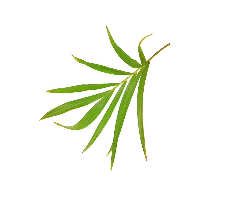 branche de feuilles vert vif photo