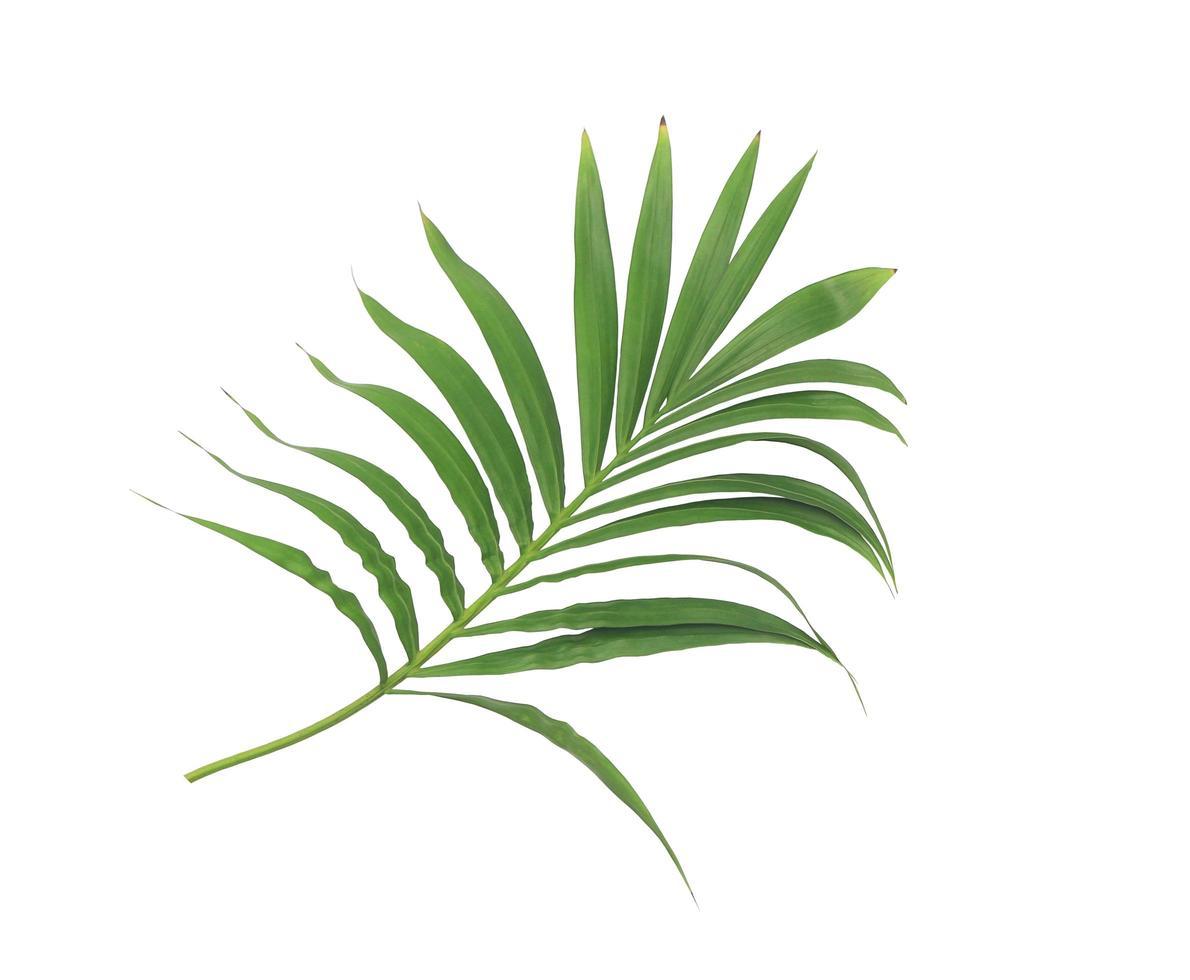 branche luxuriante de feuilles photo