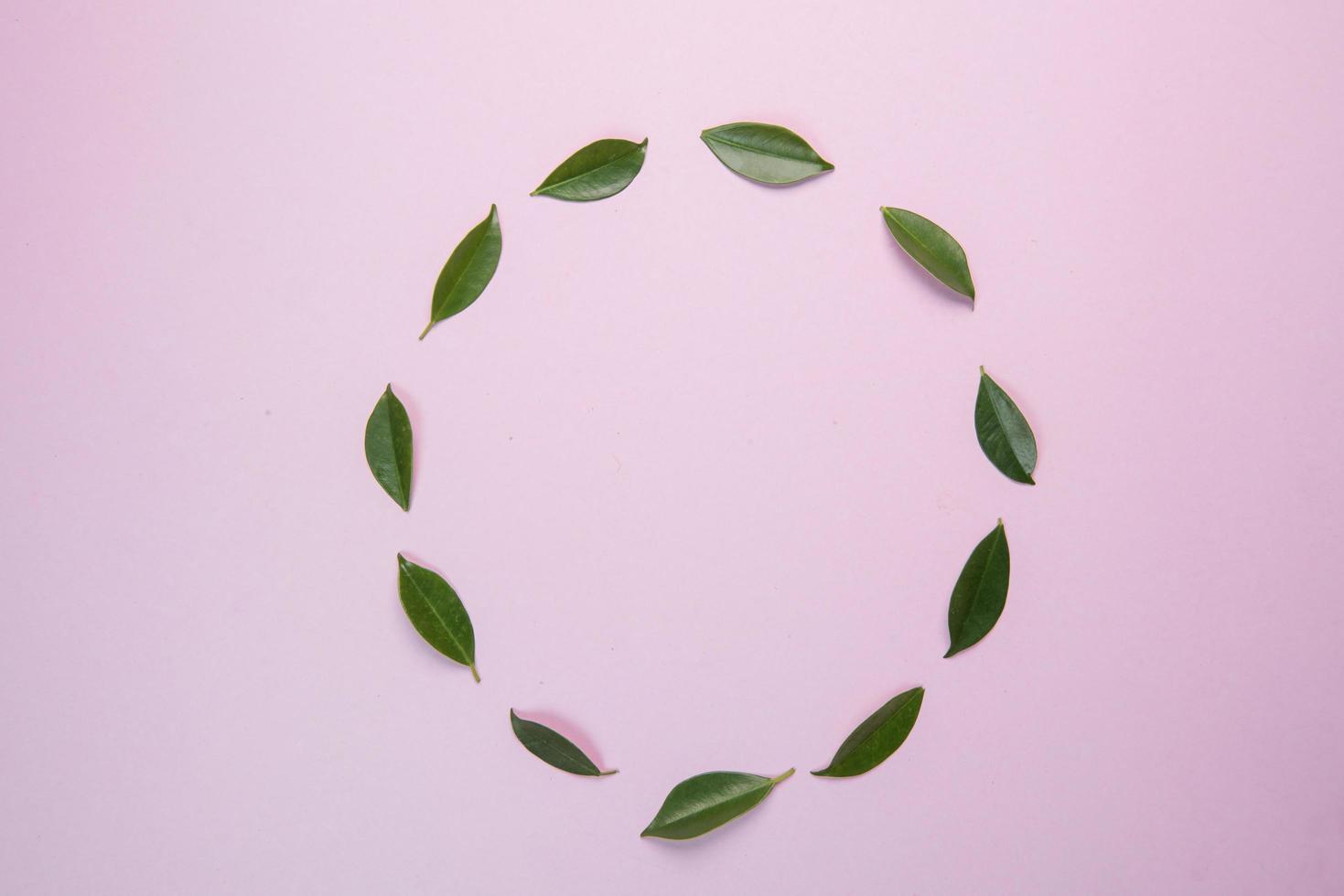 feuilles sur fond rose photo