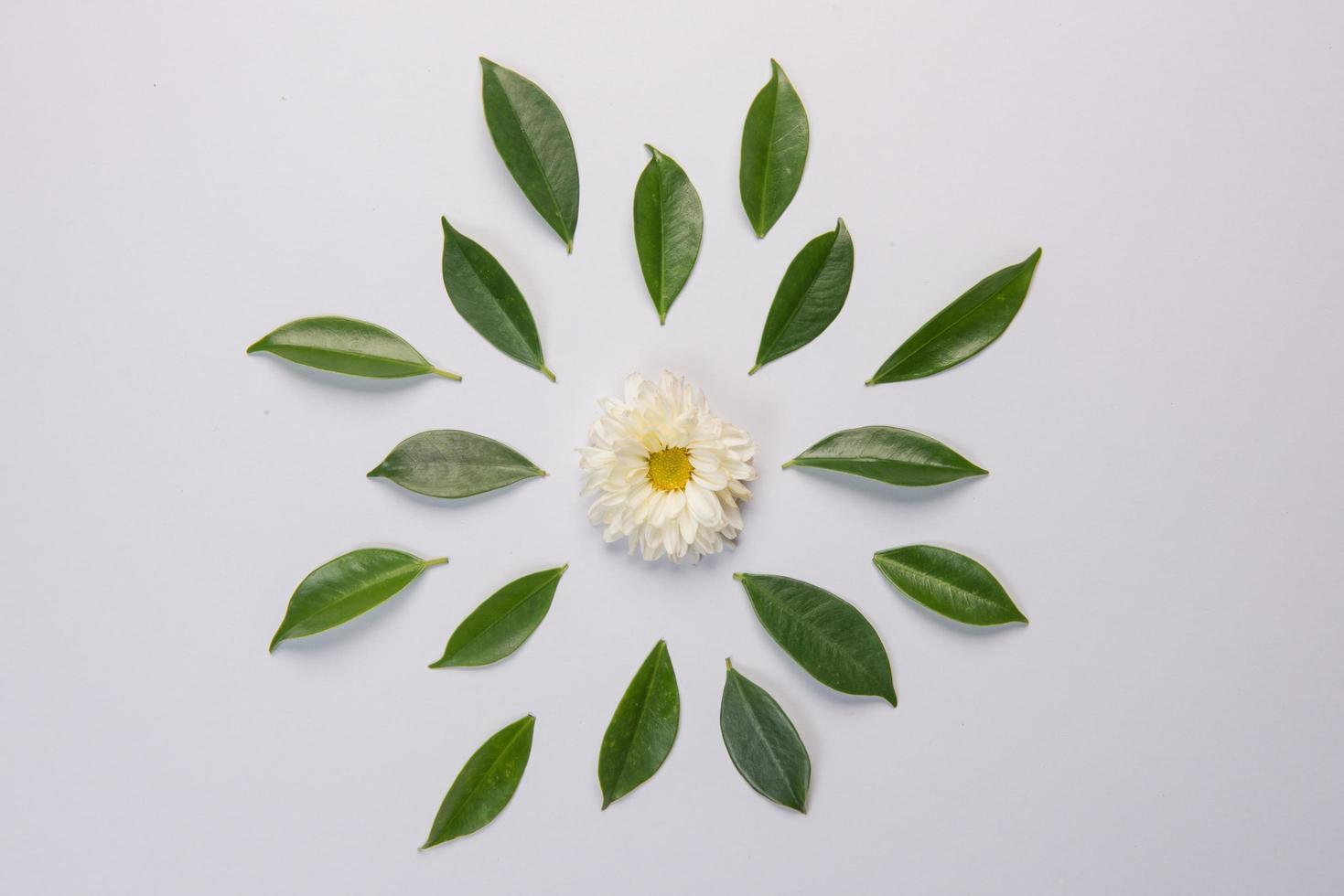 fleur et feuilles sur fond blanc photo