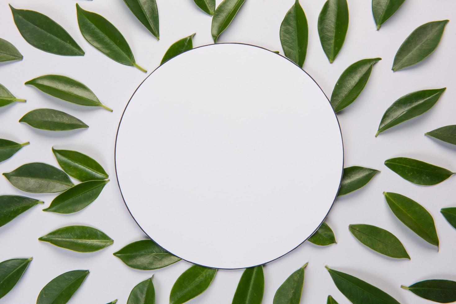 feuilles sur fond blanc avec un espace pour le texte photo