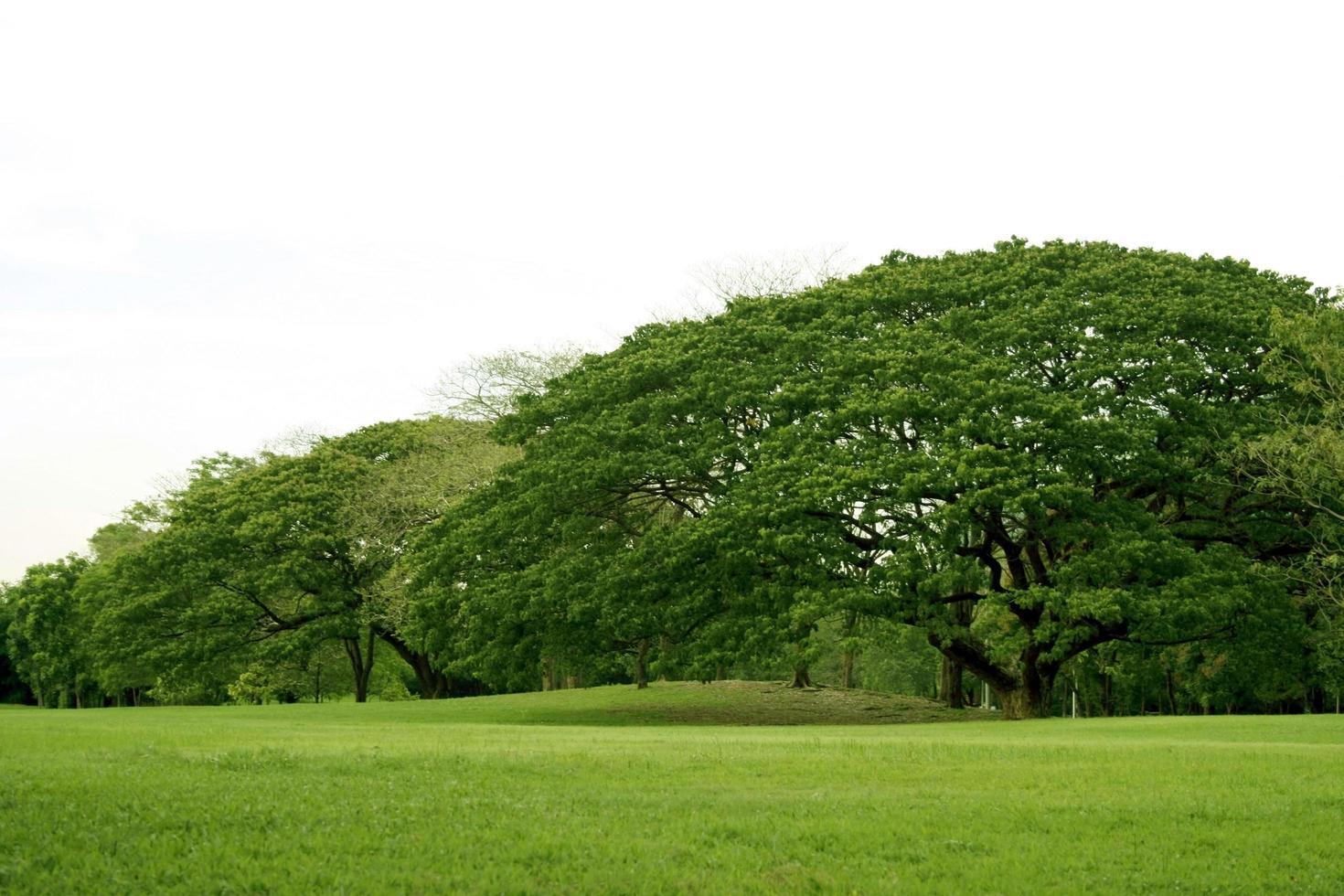 arbres verts et herbe à l'extérieur photo