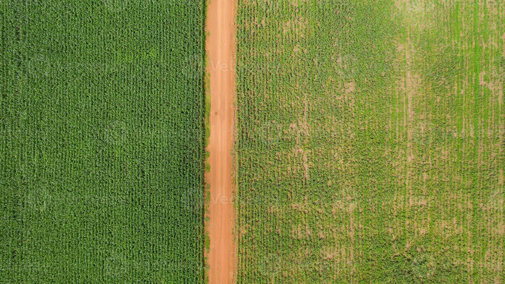 vue aérienne des champs de maïs photo