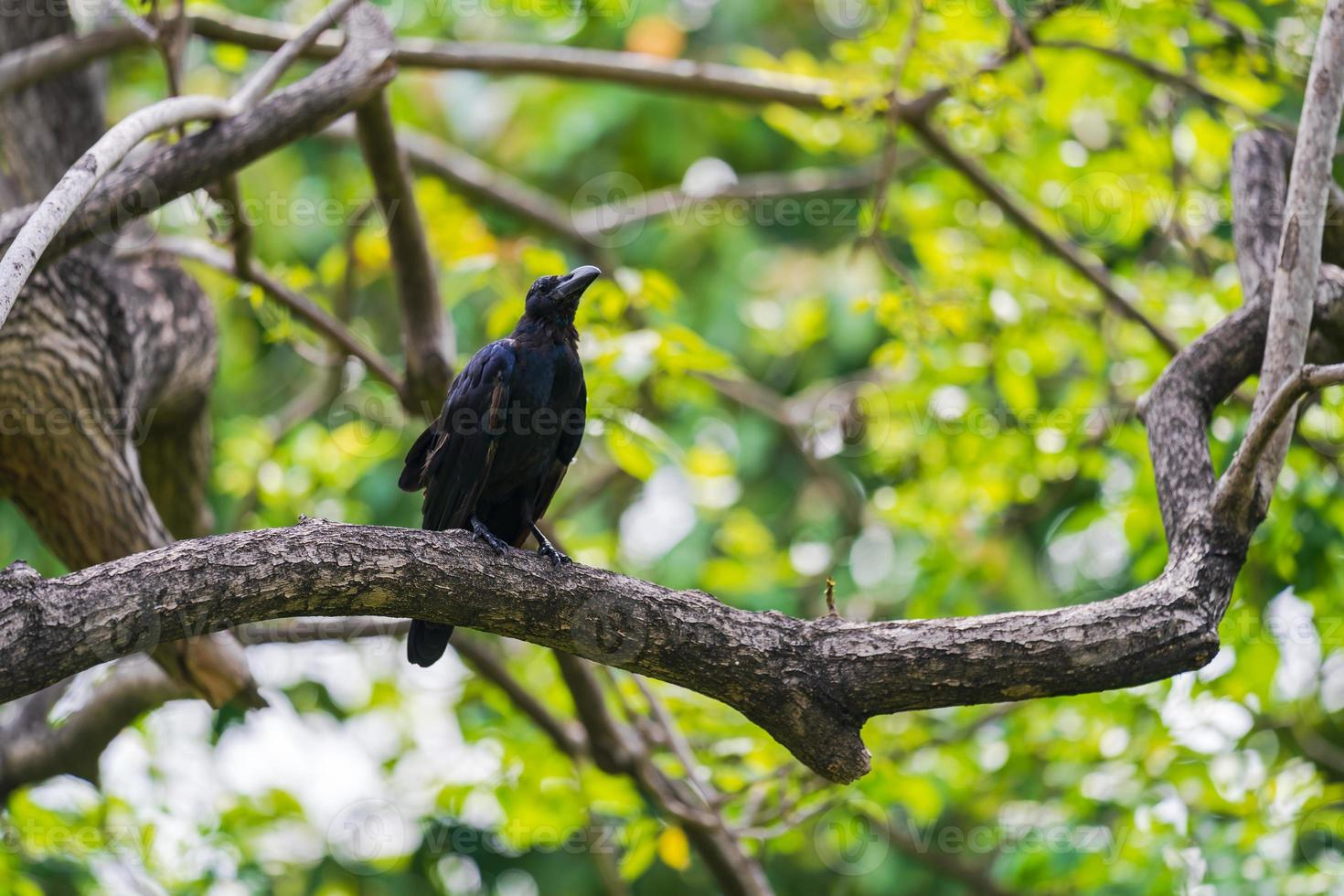 corbeau sur un arbre photo