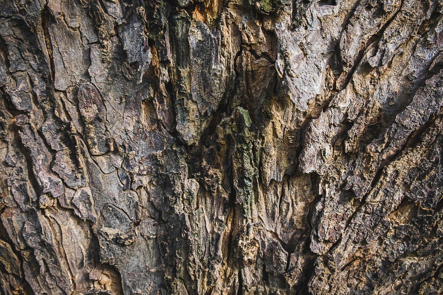 fond d'écorce d'arbre photo