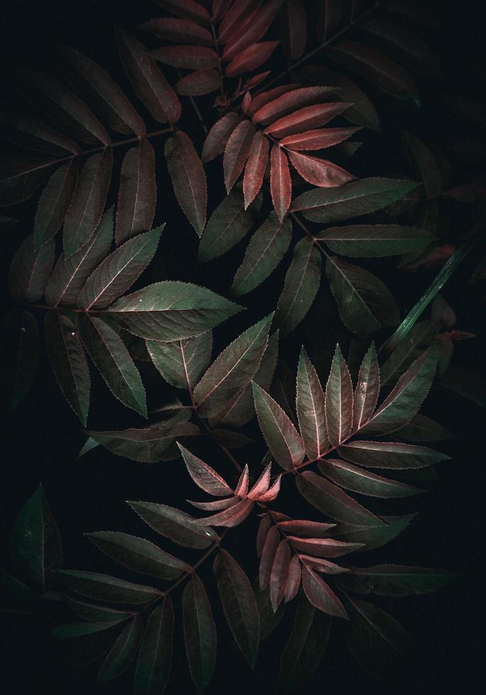 belle plante verte laisse dans la nature photo