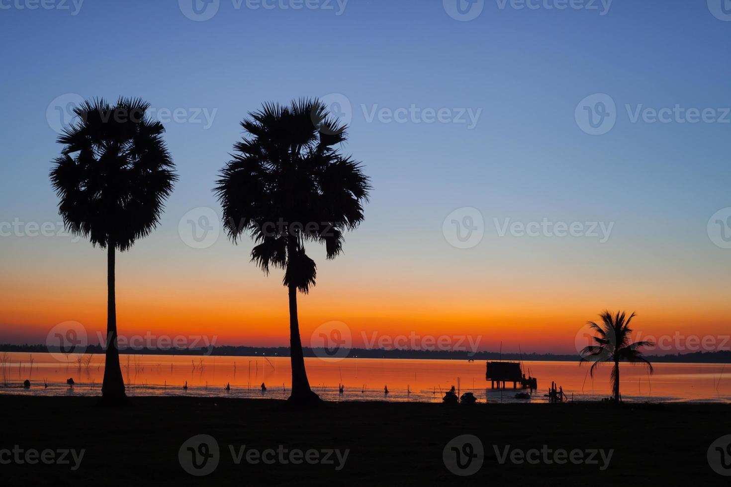 deux palmiers au coucher du soleil photo